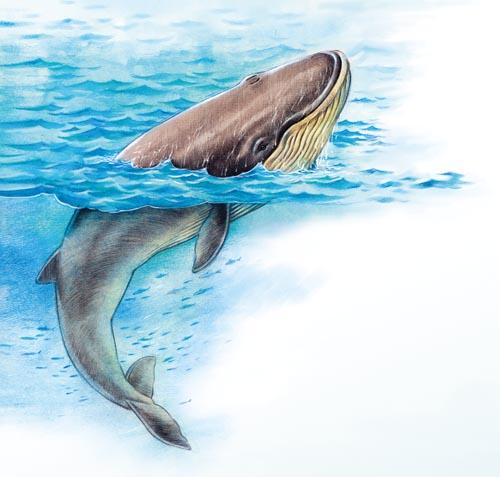 第九课 鲸 - 五年级上册 - 智慧山